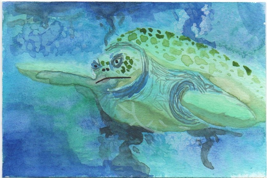 Scan of a watercolor painting of a green sea turtle. This is Myrtle, if you've been to the New England Aquarium. The colors are a little muted.